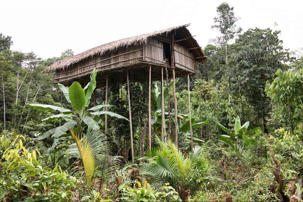 the korowai tree house