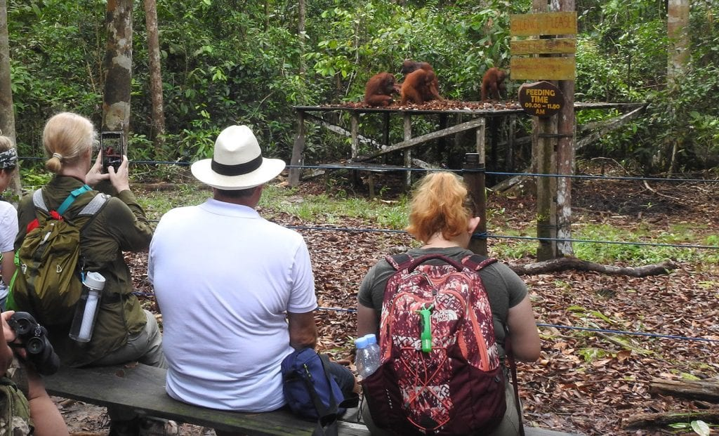 orangutan feeding station, tanjung puting